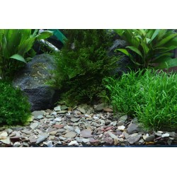 Dennerle Rio Xingu Plantahunter Series (5 KG)