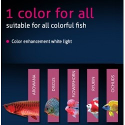 TICA ColorUp 2 (142 CMS)
