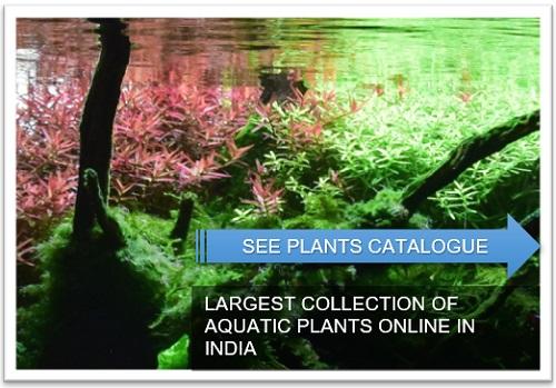 https://aquabynature-shop.com/59-aquatic-plants
